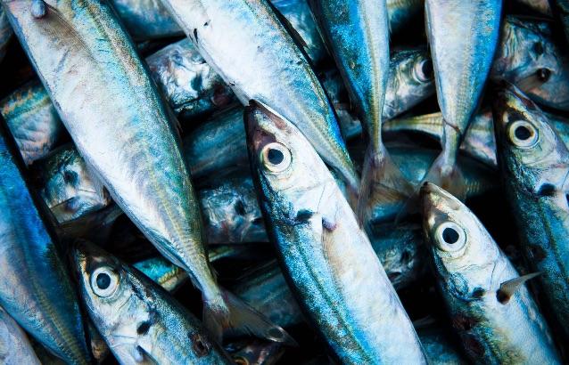 Como escolher peixe