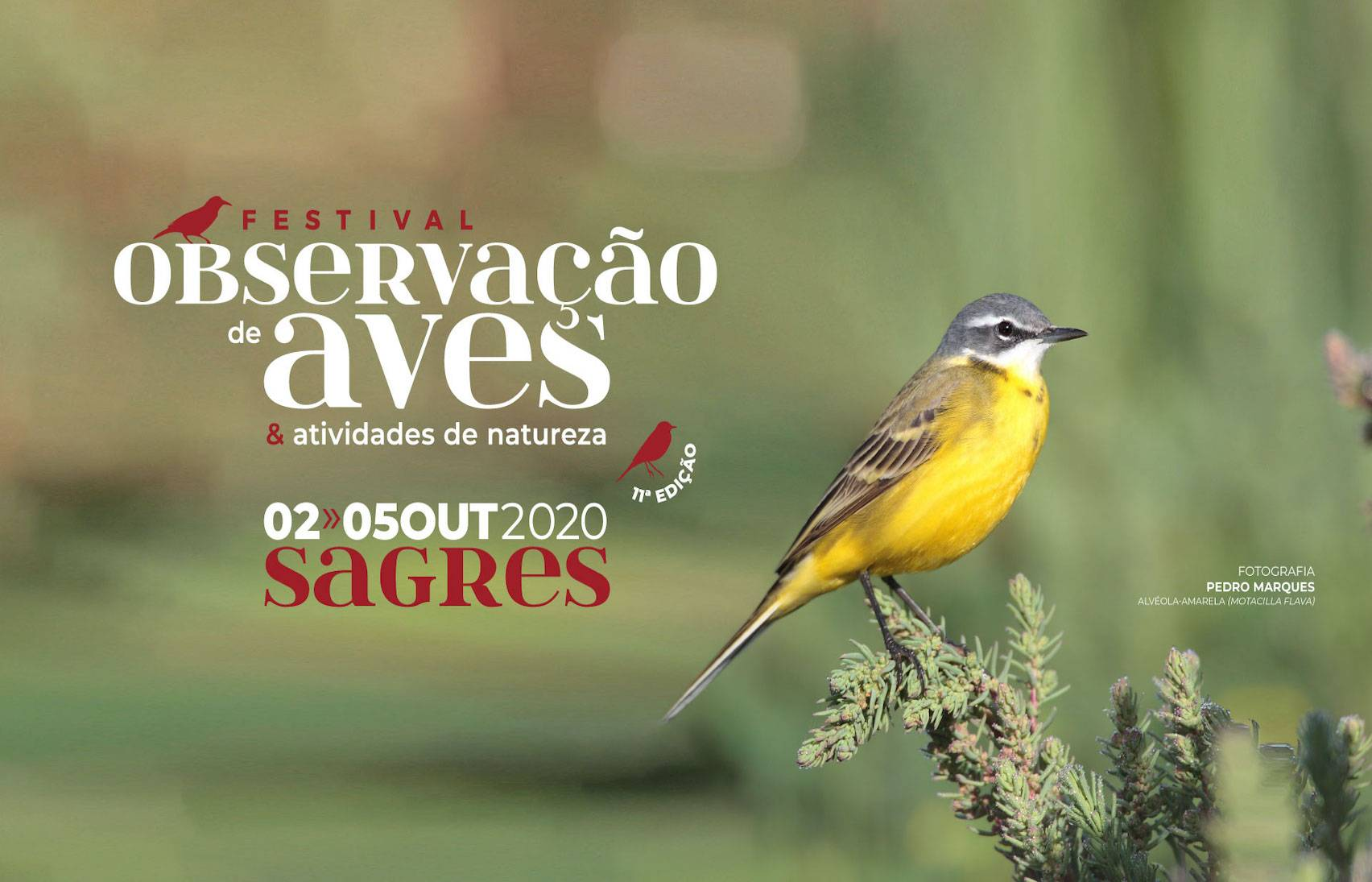 11 Festival de Observação de Aves e Atividades Natureza