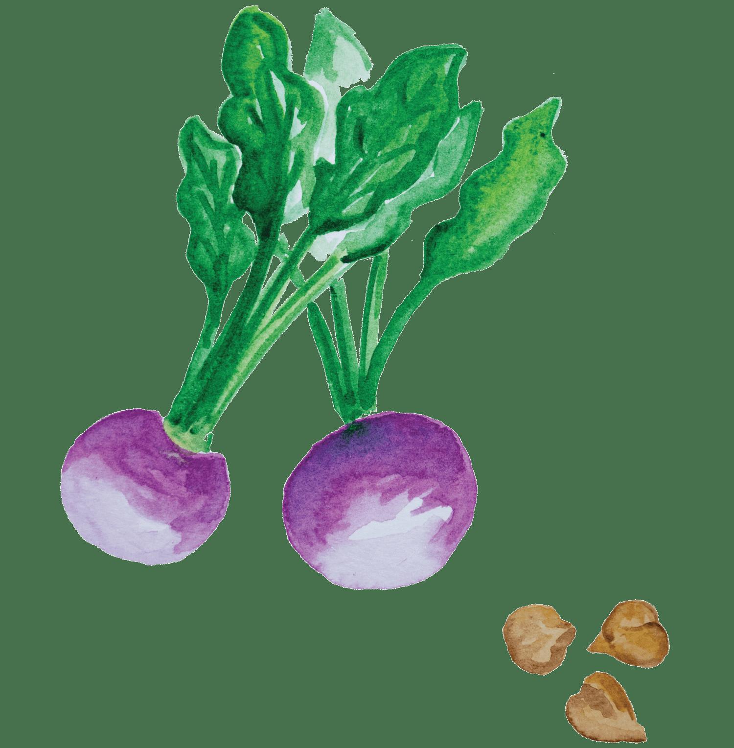 Cozido de grão com abóbora, nabo e feijão verde